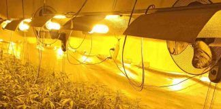 La Policía de Móstoles elimina otras dos plantaciones de marihuana de Las Sabinas