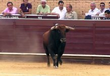 Vox Móstoles apuesta por recuperar los toros en las Fiestas de Mayo
